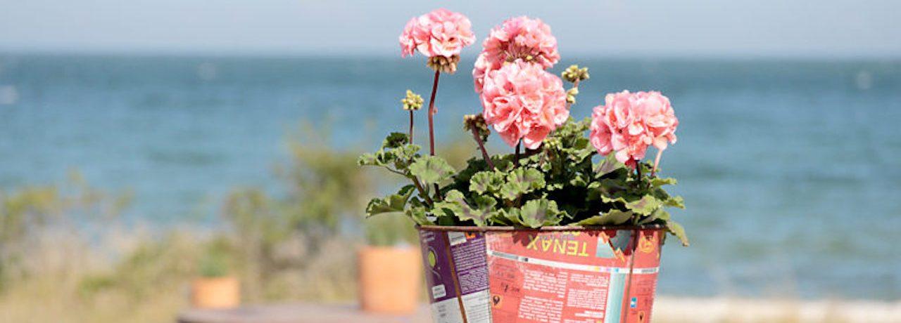 Blommor på Visbystrandby